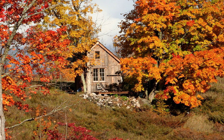 Six Tips for Autumn Log Cabin Maintenance